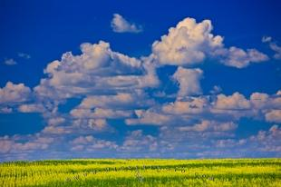 photo of Canola Crop Qu Appelle Valley Saskatchewan Canada