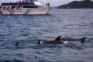 photo of Close Bottlenose Dolphins Encounter New Zealand