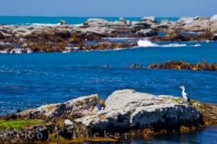 photo of Coastal Ocean Biome Kaikoura