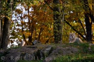 photo of Coyote Wilderness Parc Omega Montebello Quebec