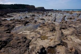 photo of Curio Bay Fossil Forest Otago