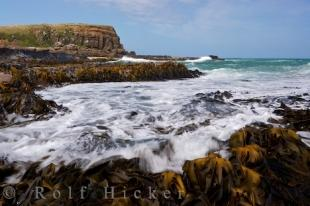 photo of Curio Bay Kelp Fossil Forest New Zealand