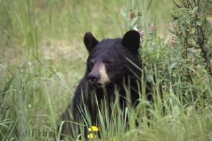 photo of Cute Black Bear
