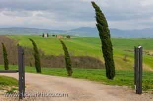 photo of Cypress Trees Tuscany Country Italy Europe
