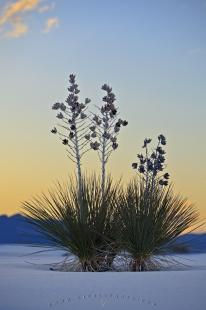 photo of Desert Sunset White Sands National Monument