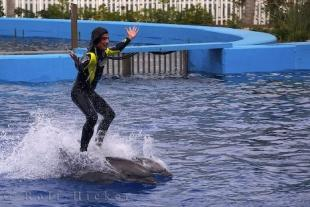 photo of Dolphin Ride L Oceanografic Valencia Spain