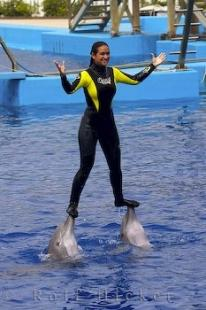 photo of Dolphin Show Valencia