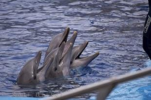 photo of Dolphins Teeth L Oceanografic Valencia Spain