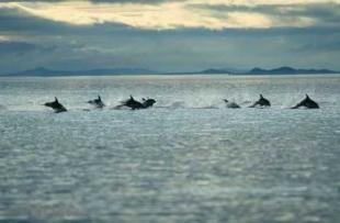 photo of Dolphins Traveling