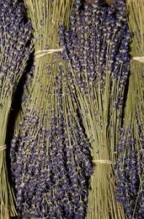 photo of Dried Lavender Bunches