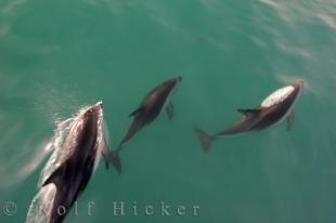 photo of Dusky Dolphins Tour Kaikoura