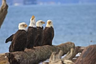 photo of Eagles Birds