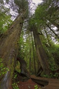 photo of Enchanted Rainforest Trail Pacific Rim National Park Vancouver Island