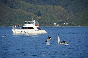 photo of Encounter Kaikoura Dolphin Watching