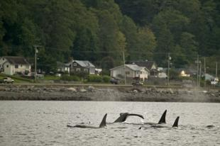 photo of Whale Watching In Bc Along Shore