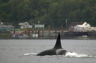 photo of Whale watching Port McNeill