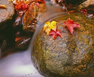 photo of Colorful Fall Leaves Flowing Water Bay of Fundy National Park