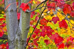 photo of Fall Photography Algonquin Provincial Park Ontario