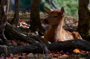photo of Fawn Picture