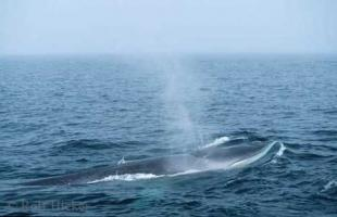 photo of Fin Whale Picture