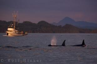 photo of Fishing Boat Whale Watching Northern Vancouver Island