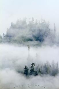 photo of Fog Mist Great Bear Rainforest British Columbia