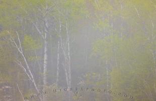 photo of Nature Foggy Spring Forest Lake Superior Ontario