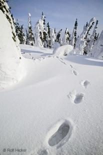 photo of Footprints Winter Deep Snow
