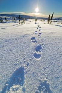photo of Footprints In The Snow
