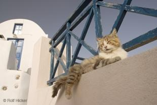 photo of Funny Cat
