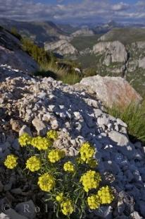 photo of Gorges Du Verdon Flowers