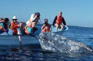 photo of Gray Whale Tourists