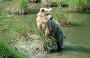 photo of Sanctuary grizzly bear photo