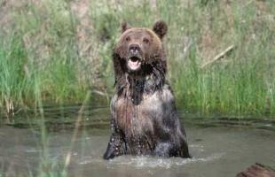 photo of Grizzly Bear Photos