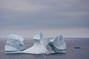 photo of Iceberg Tour Boat Size Comparison Picture Newfoundland