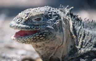 photo of Iguana Pictures