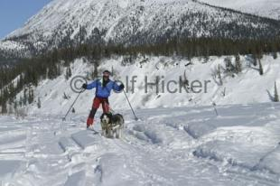 photo of Skijoring Husky Pull