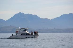photo of Boat Tour Kaikoura Travel Canterbury New Zealand