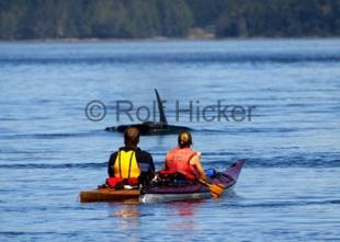 photo of Kayaking Vancouver Island