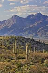 photo of Mountain Landscape Saguaro National Park