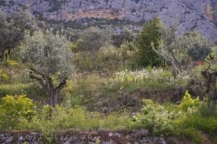 photo of Landscape Terraced Walls Provence