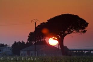 photo of Large Setting Sun Umbrella Tree Village Aigues Mortes Bouches Du Rhone Provence France