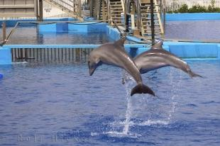 photo of Dolphin Leaps Bounds