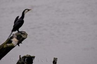 photo of Little Shag Picture Catlins Highway Otago South Island New Zealand