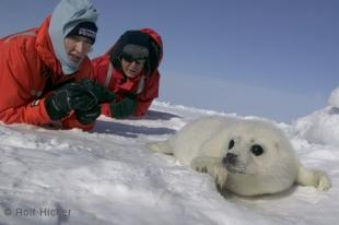 photo of Heather And Paul McCartney White Seal