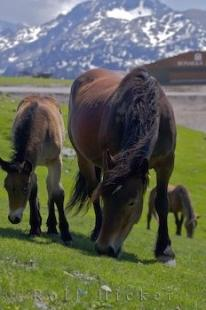photo of Mountain Horses Pyrenees Spain