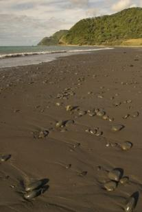 photo of New Zealand Beach Holiday