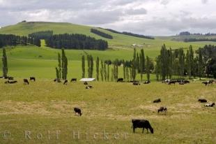 photo of New Zealand Farmland Picture