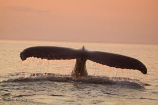 photo of whales of newfoundland
