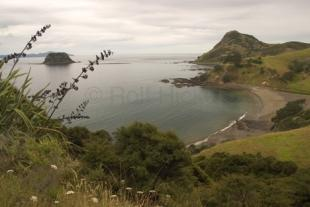 photo of Coromandel